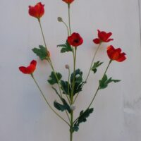 Anemone spray arancio (Copia)