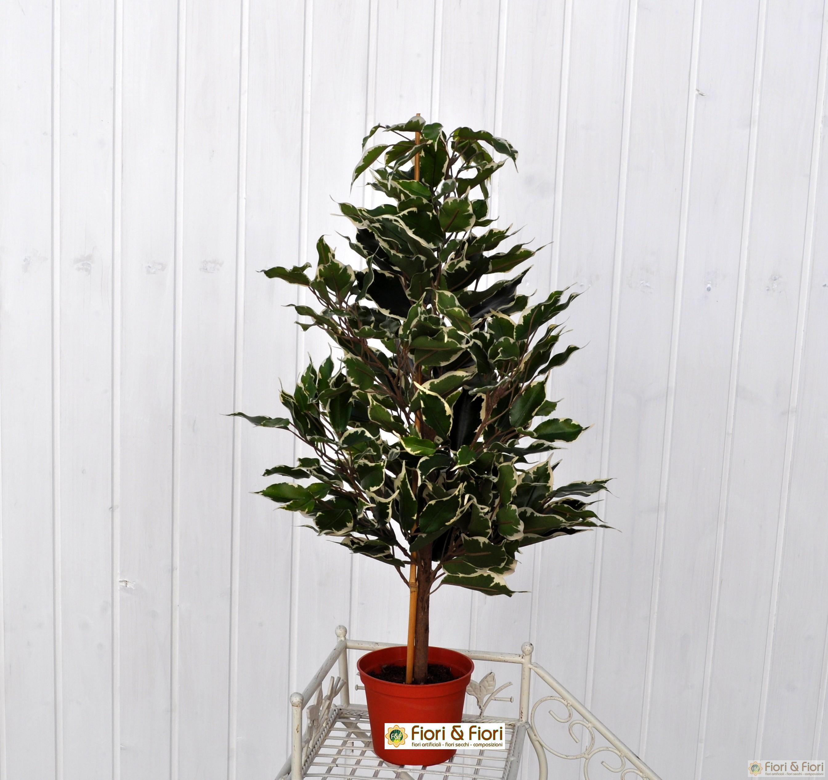 Come Riprodurre Il Ficus Benjamin ficus benjamin artificiale variegato