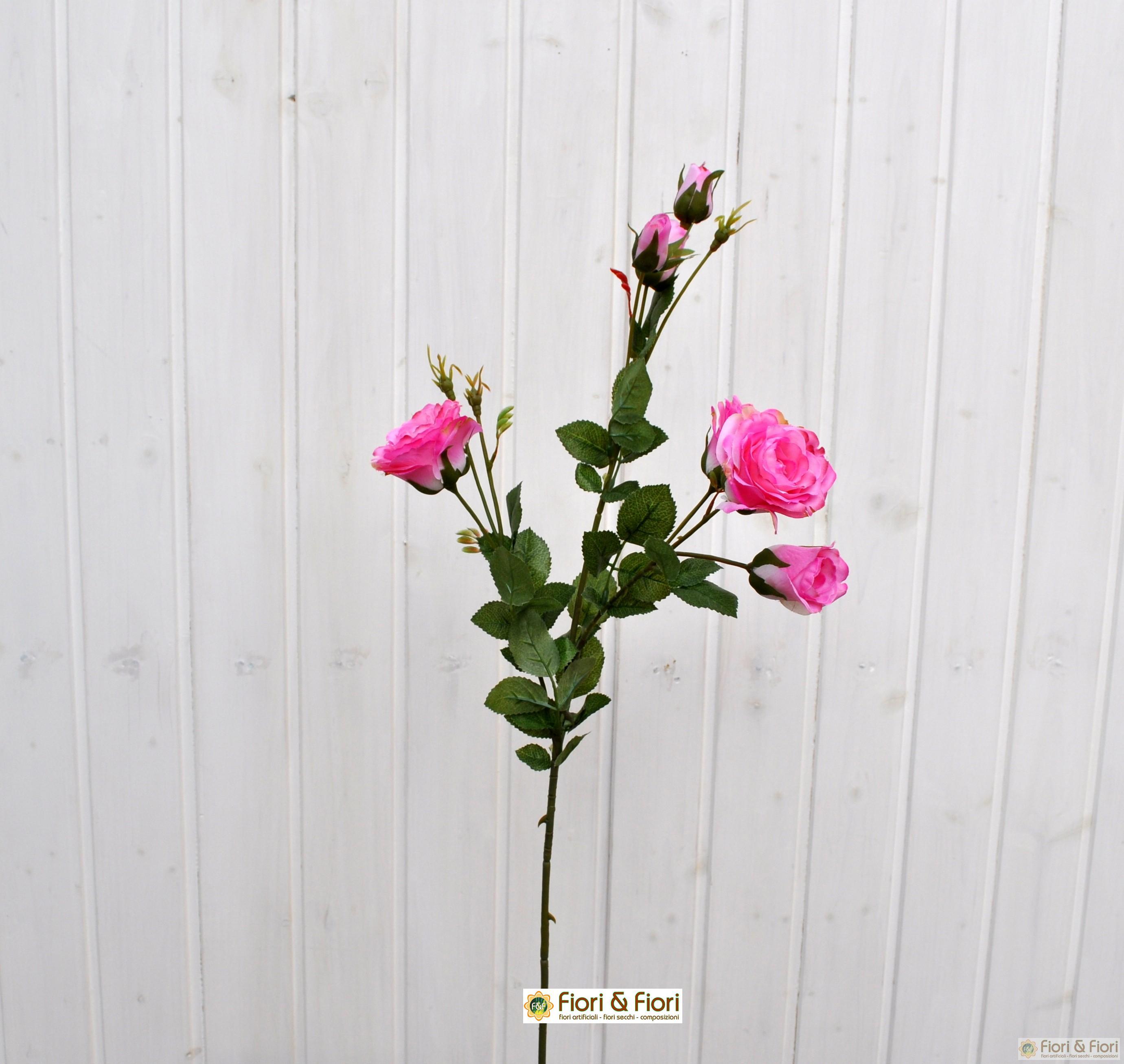 rosa henriette rosa