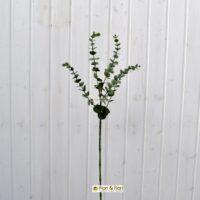 Eucalipto gunnii