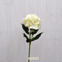 Ortensia macrophylla bianco