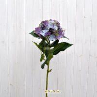 Ortensia macrophylla blù