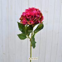 Ortensia macrophylla rosa