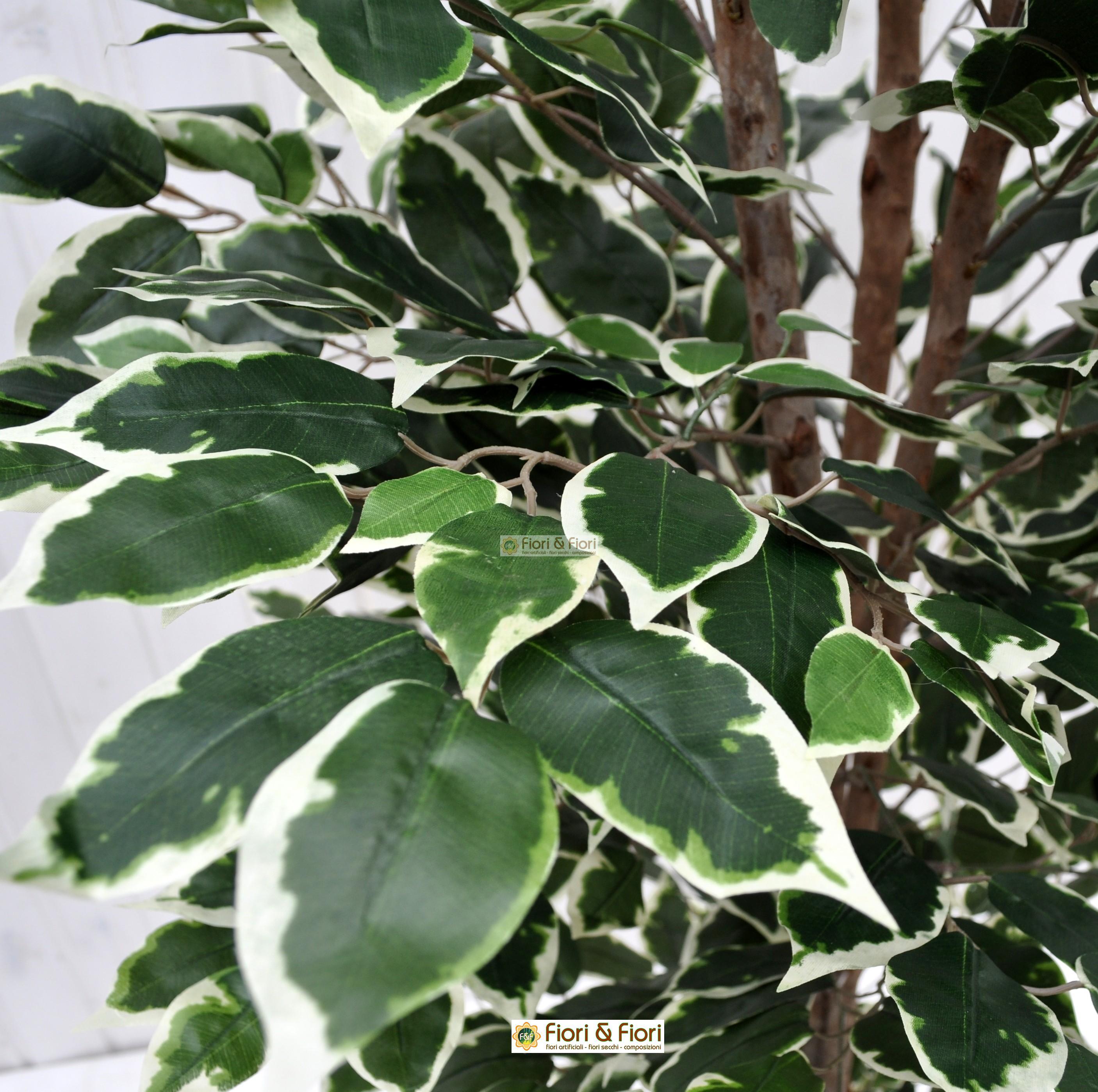 Come Riprodurre Il Ficus Benjamin pianta artificiale ficus benjamin variegato 125