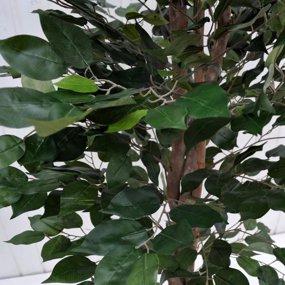 Ficus benjamin verde per arredamento della casa fiori fiori for Piccolo creatore della pianta della casa