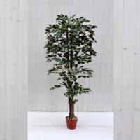 Pianta artificiale Ficus Benjamin variegato 150