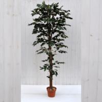 Pianta artificiale Ficus Benjamin verde 180