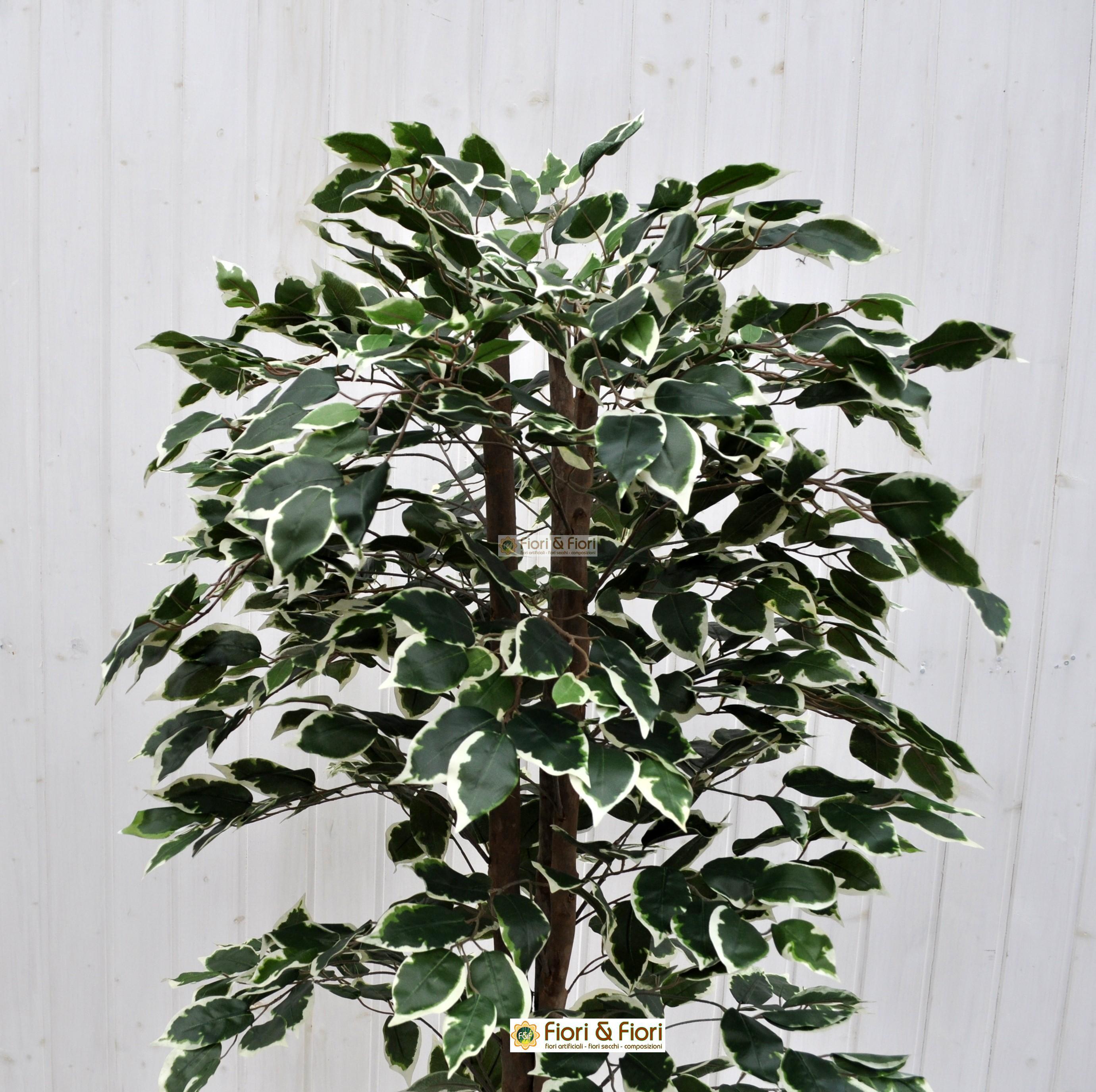 Come Riprodurre Il Ficus Benjamin pianta artificiale ficus benjamin variegato 150