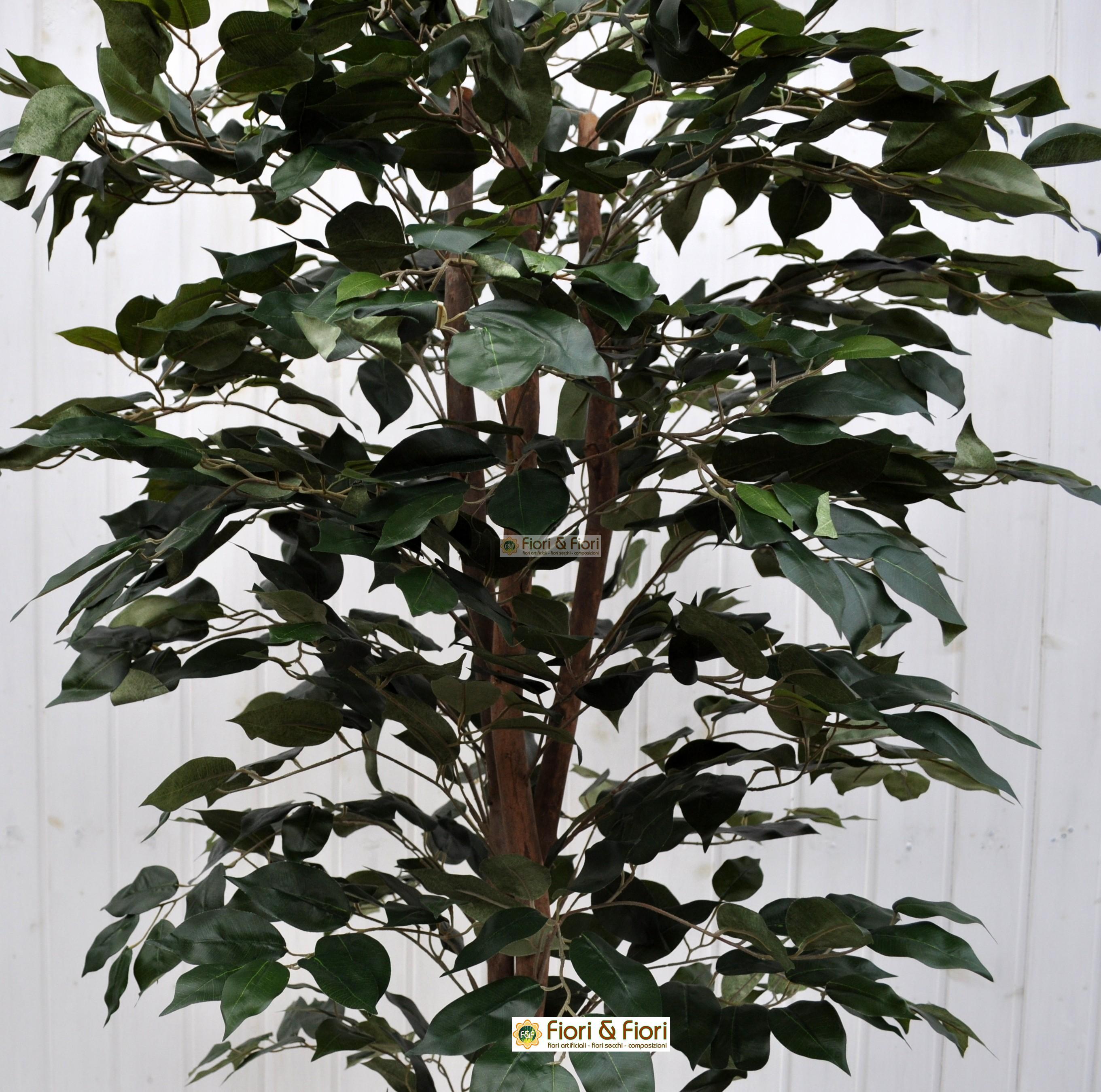 Come Riprodurre Il Ficus Benjamin pianta artificiale ficus benjamin verde 180