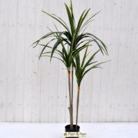 Pianta artificiale Yucca