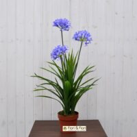 Pianta artificiale agapanthus