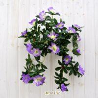 Surfinia artificiale Pastell sunpapi viola