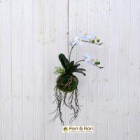 Orchidea artificiale Kokedama grande