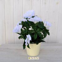 Petunia artificiale bianca