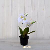 Pianta artificiale phalaenopsis bianca