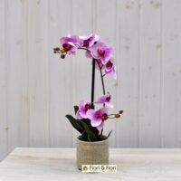 Pianta phalaenopsis artificiale real touch rosa