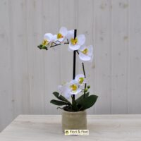 Pianta phalaenopsis artificiale real touch bianco