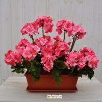 Geranio artificiale balcone rosa