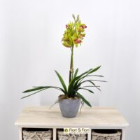 Orchidea cymbidium artificiale verde