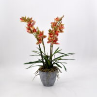 Cymbidium artificiale verde