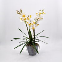 Cymbidium artificiale bianco