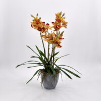 Cymbidium artificiale arancio