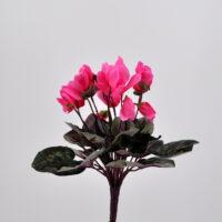 Ciclamino artificiale rosa