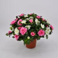 Pianta artificiale Azalea bicolore rosa