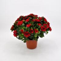 Pianta artificiale Azalea rossa