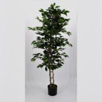 Pianta artificiale Ficus Benjamin verde 150