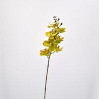 Orchidea phalaenopsis artificiale verde