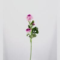 Ranuncolo artificiale lilla