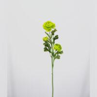 Ranuncolo artificiale verde