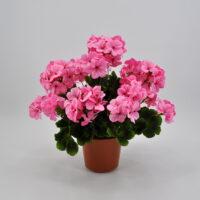Geranio artificiale lux rosa