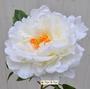 P.2 Peonia artificiale bianca