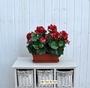 Geranio artificiale pelargonium rosso bne