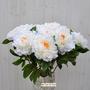 P.1Peonia artificiale bianca