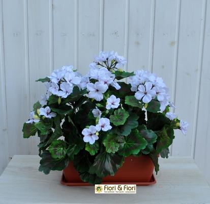 Geranio artificiale pelargonium bianco B.ne