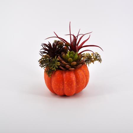 Composizione succulenti grande arancio