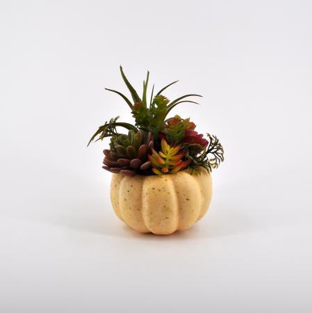 Composizione succulenti grande bianco