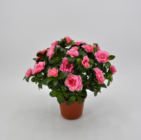 Azalea artificiale medium rosa