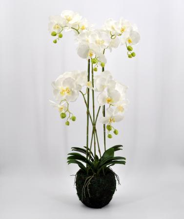 Phalaenopsis artificiale cm 100 real touch