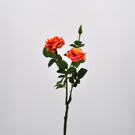 Rosa piccadilly arancio