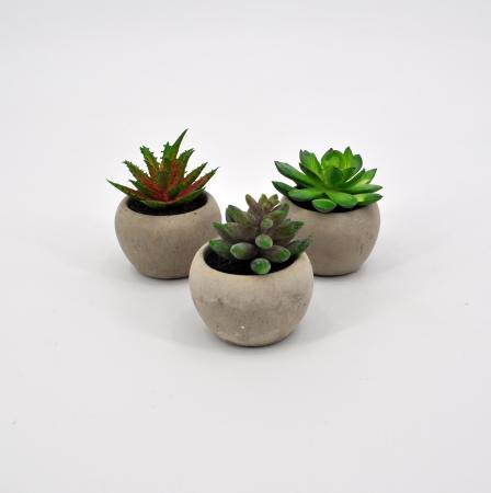Tris succulenti verde
