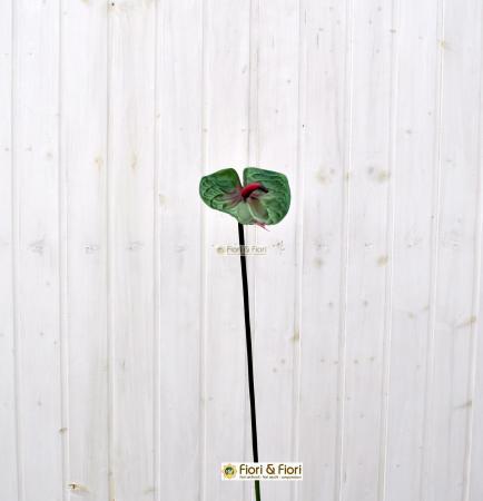 Anthurium rosso come si cura - Porta a battente significato ...