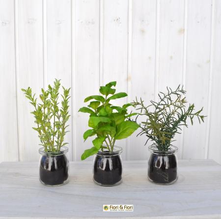 Piante aromatiche artificiali vetro