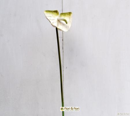 fiore artificiale anthurium bianco